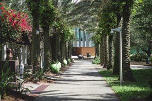 USF Campus image